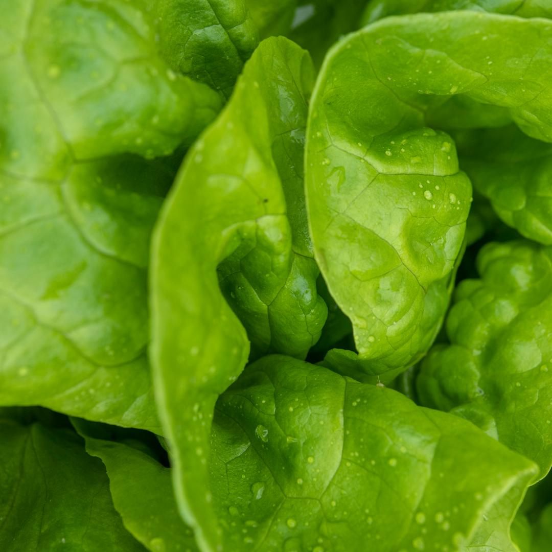 Tammy's Salad